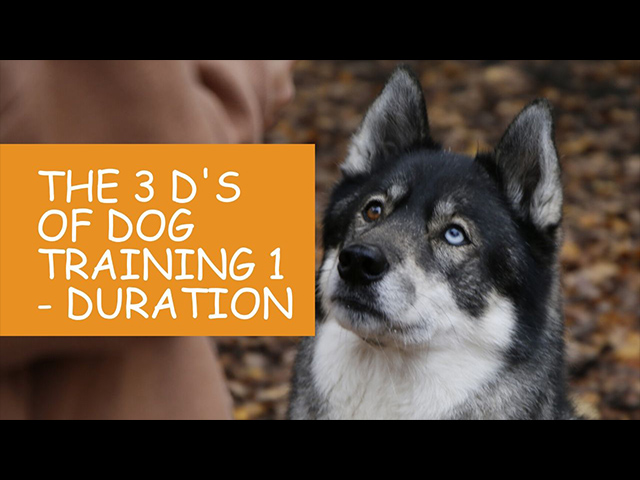 K9 Kindergarten Tutorial Video The 3 Ds of Dog Training 1 Duration.jpg