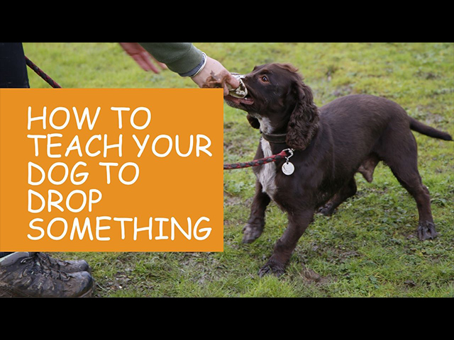 How-To-Teach-Your-Dog-To-Drop-Something.jpg