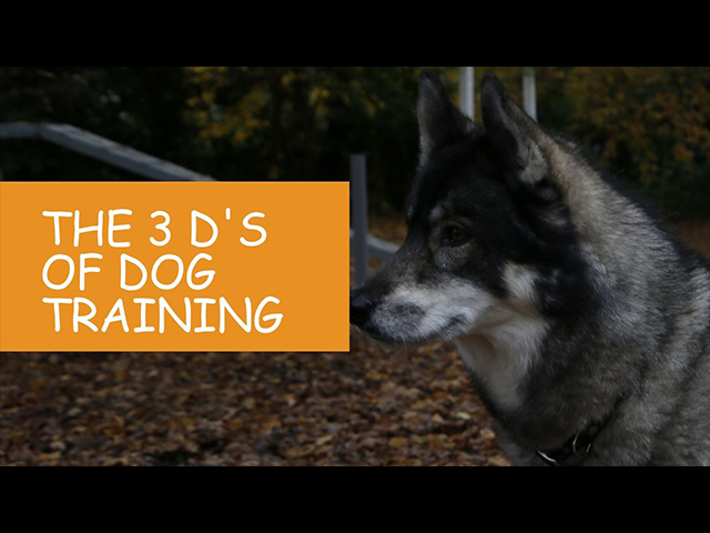 K9 Kindergarten Tutorial Video The 3 Ds of Dog Training.jpg