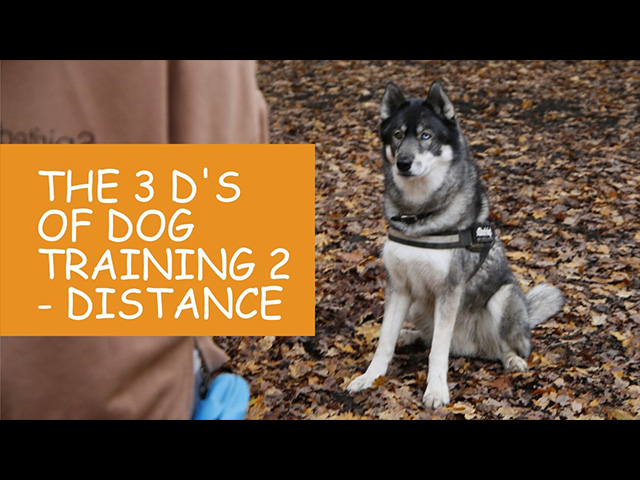 K9 Kindergarten Tutorial Video The 3 Ds of Dog Training 2 Distance.jpg