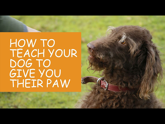 How-to-Teach-Your-Dog-To-Give-You-Their-Paw.jpg