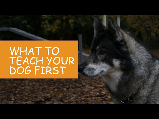 K9 Kindergarten Tutorial Video What to Teach Your Dog First.jpg