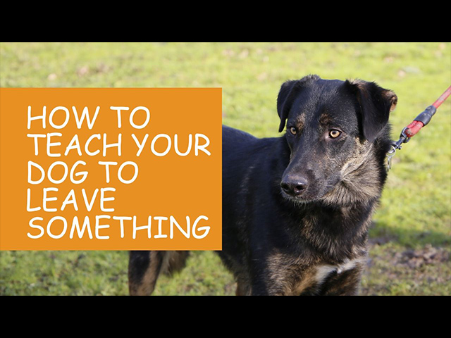 K9 Kindergarten Tutorial Video How To Teach Your Dog to Leave Something.jpg