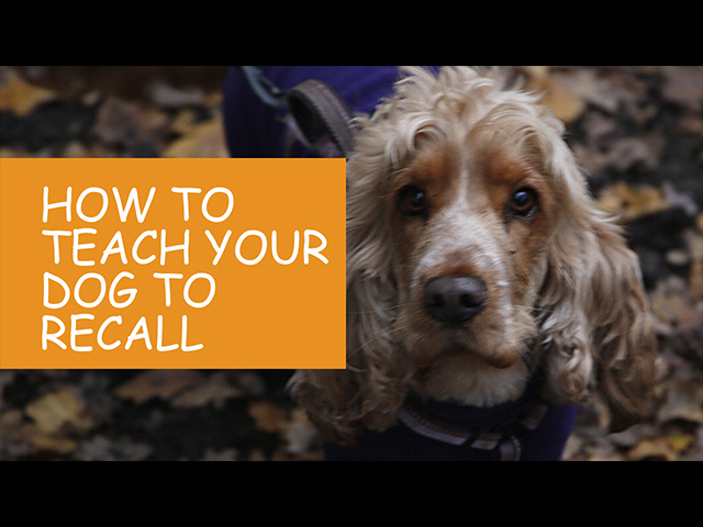 How-To-Teach-Your-Dog-To-Recall.jpg